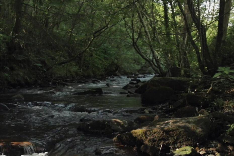 A River (2016)